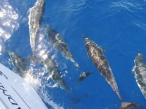 Dolfijnen l Zeilen in Griekenland l Zeilen in de Sporaden l BQ Yachting